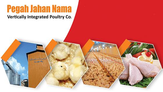 زنجیره تولید و توزیع گوشت مرغ