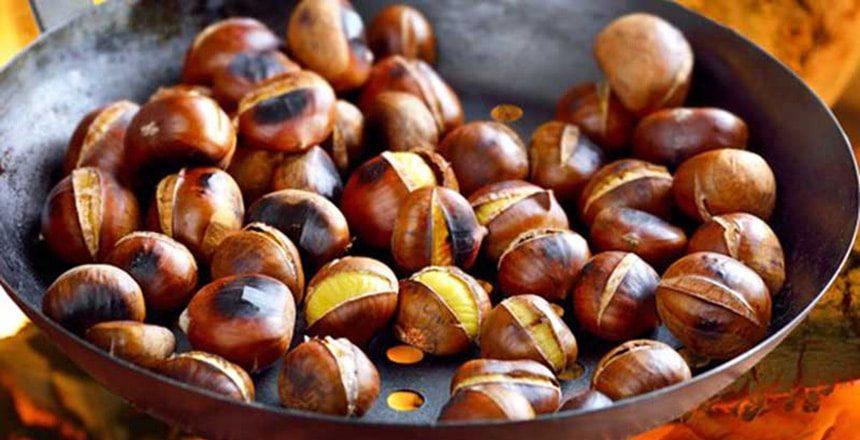 اثرات میوه بلوط خام و عمل آوری شده بر عملکرد جوجههای گوشتی