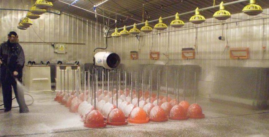 آماده سازی مزرعه گوشتی قبل از جوجه ریزی